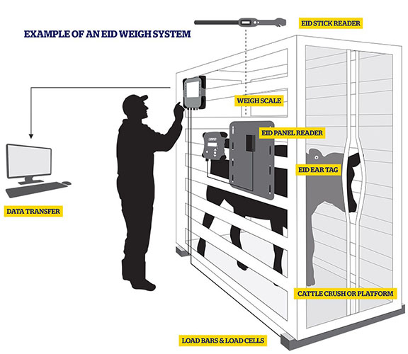 Image source: EID Weigh System, courtesy of Datamars Livestock