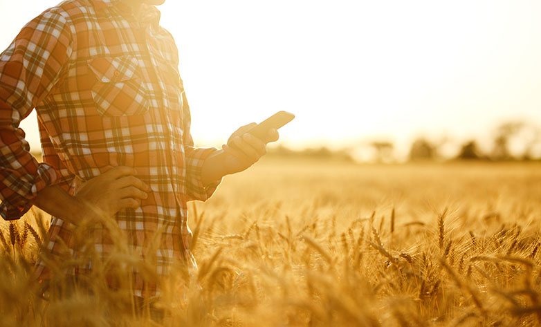 Farmer in field with phone