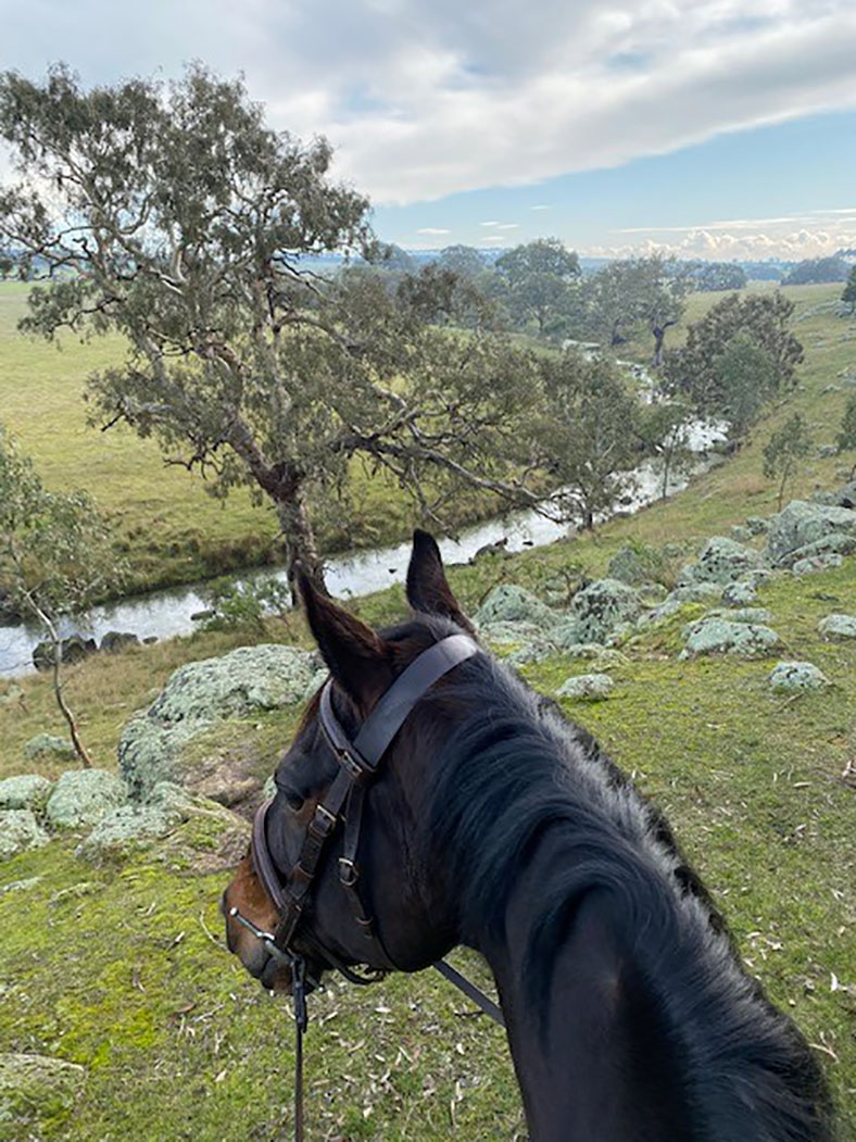 Horse looks out over river and vast countryside